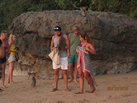 Golden Beach Resort: а вот и обезьянки в конце пляжа . которые охотно позируют за еду
