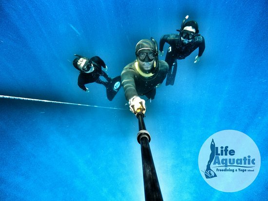 Life Aquatic Freediving and Yoga School