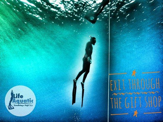 Life Aquatic Freediving and Yoga School
