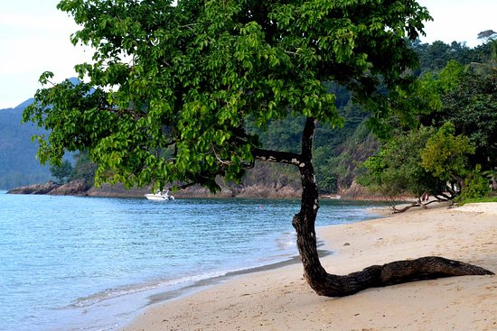 Kai Bae Beach The Tree Adds To Its S Beauty