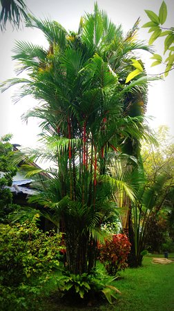 Sabai Resort: Particolare del giardino di fronte al bungalow