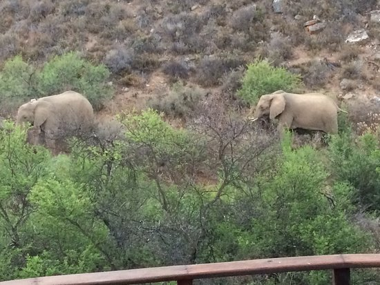 White Lion Lodge: Elephants walking by our private deck