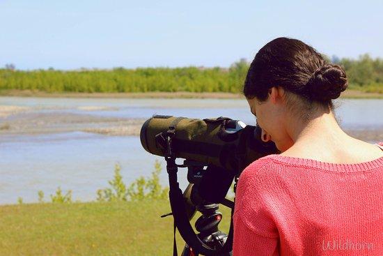 Poti, Gürcistan: Birdwatching