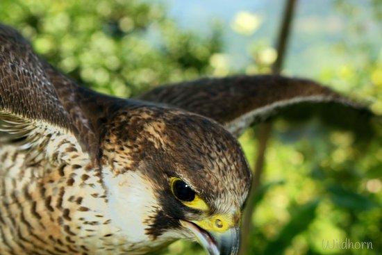 Poti, Gürcistan: eagle