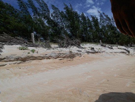 Bosque Beach: 20161211_095734_large.jpg