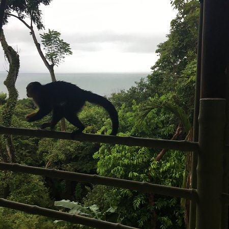 Issimo Suites Boutique Hotel and Spa: Monkeys on our balcony during our visit in November