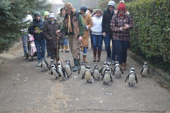 Jaszbereny, Венгрия: Walking in the penguin wonderland :D