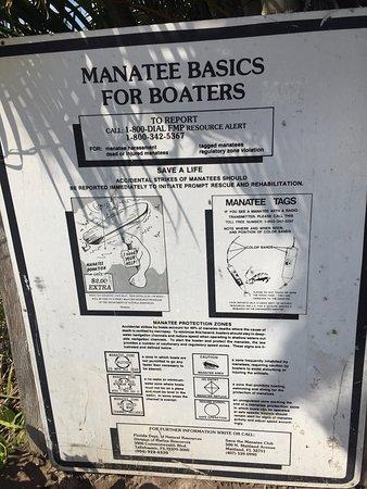 Port Saint Lucie, FL: Ламантины плавают у берега, вызывая восторг не только у детей