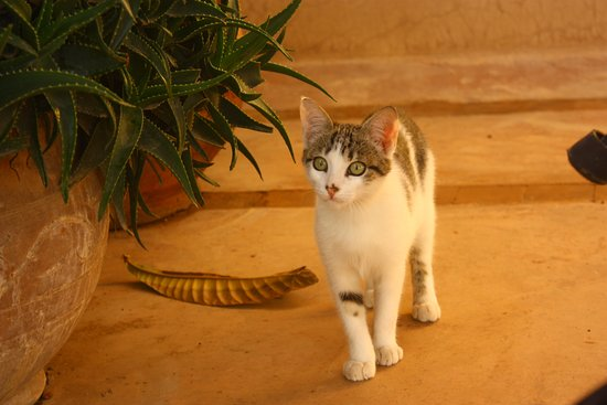 Riad Taroudant : Our favourite member of staff!