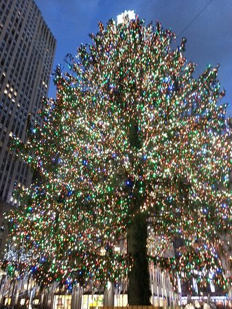 2016 rockefeller center christmas tree frontal photo