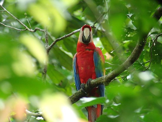 Napo Cultural Center: parrot that can be viewed on an excursion