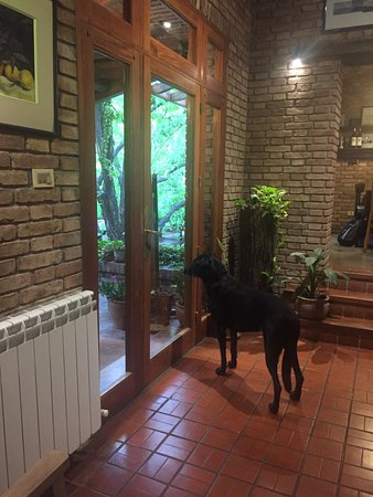 Casa Glebinias: The beloved family dog, Milagro, on the lookout!