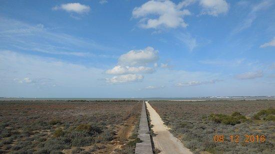 Parque Metropolitano Marisma de los Toruños y Pinar de la Algaida