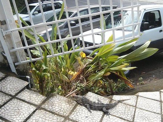 Hotel Coco Beach: IMG_20161208_093338_large.jpg