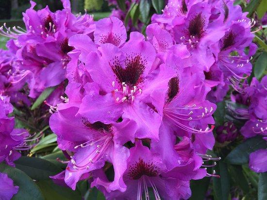 Κουίνσταουν, Νέα Ζηλανδία: More rhododendrons