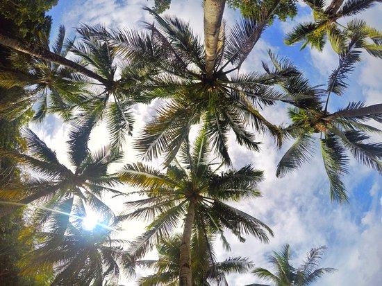 Banana Island: palms