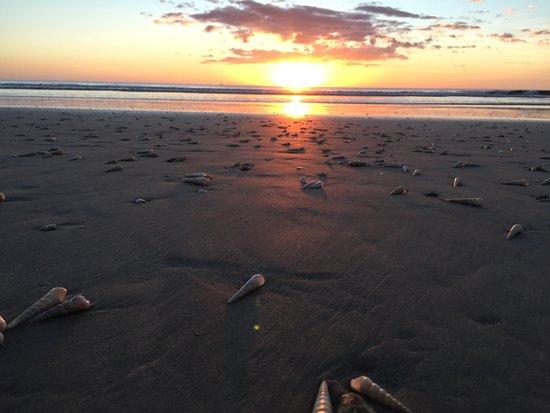 Playa Grande, Costa Rica: No encontre las tortugas pero me encontre con un mar de conchas!