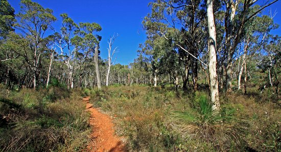 Perth Hills, Australia: Aussie Bush Walks Tour