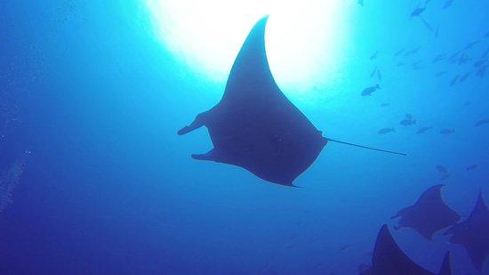 Diving Bluetribe Moofushi : Manta ray
