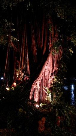 Imperial Pattaya Hotel: Ночью в дебрях фикуса