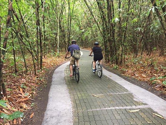 Bali Hai Bike Tours: Bamboo forrest