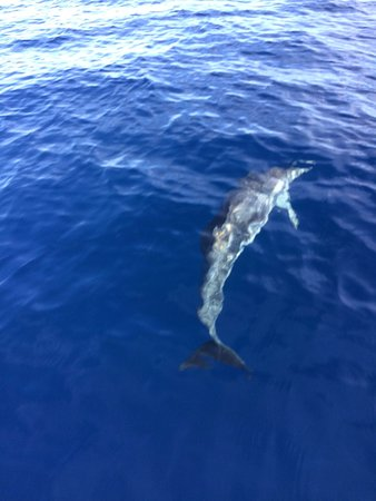 Lanzarote Powerboat Services: Dolphins!