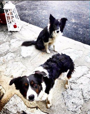 Provincia di Sondrio, Italia: Zippo e Mosca i due bellissimi cagnoloni dell'agriturismo! ♥