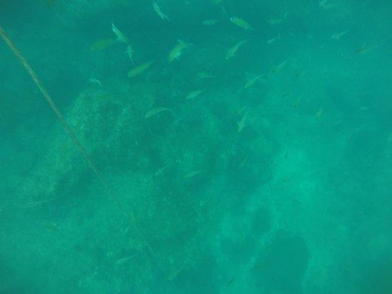 Scuba Quest Dive Center Kamala: Tauchen