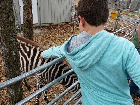Branson, MO: He loved the baby zebra!