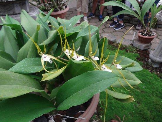 Orchid picture of jardin botanico lankester cartago for Jardin lankester