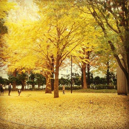 Hiratsuka City Park: IMG_20161123_171043_large.jpg