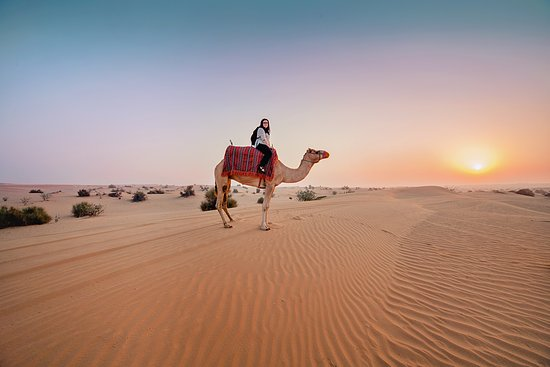 Awesome camel ride picture of dubai desert safari tours dubai dubai desert safari tours awesome camel ride altavistaventures Choice Image
