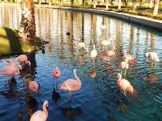 JW Marriott Desert Springs Resort & Spa: Pink Flamingos in water leading up to the hotel