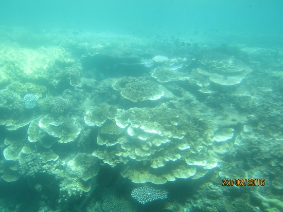 Cairns Region, Australia: Coral seen from omniviewer - cloudy due to recent rain