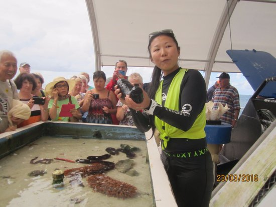 Cairns Region, Australia: Tidal pool tank with marine biologist holding sea cucumber