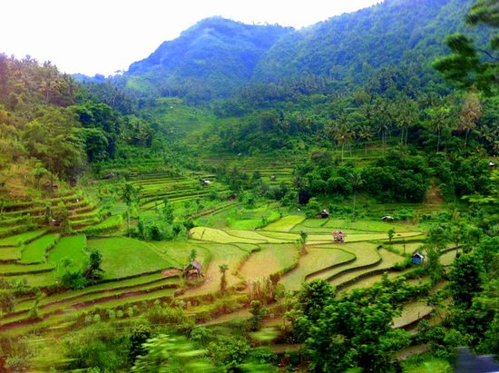 Bunutan, Indonesien: Rice fields along Sideman Rd.