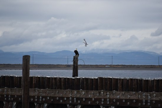 Port Angeles, WA: photo8.jpg