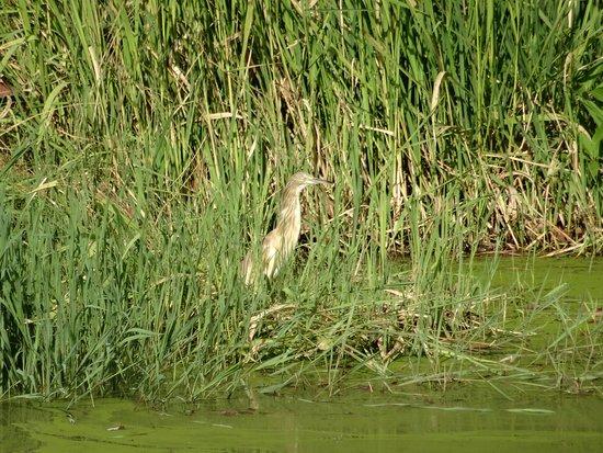 Bakau, Gambiya: bird