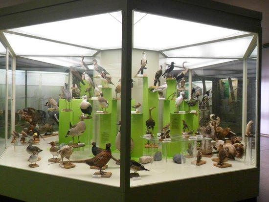 Castelnuovo Don Bosco, Ιταλία: Interno museo