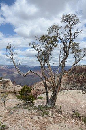 Arizona Grand Canyon Tours - Day Tour: un solitario
