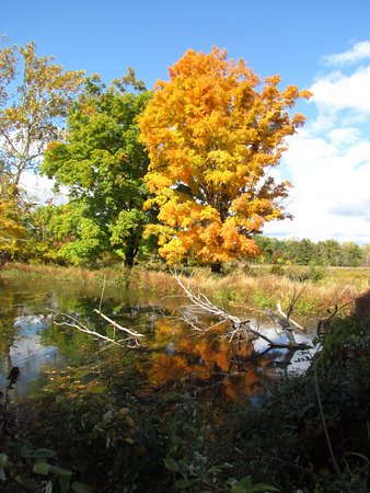 Cornwall, NY: Fall at HHNM!