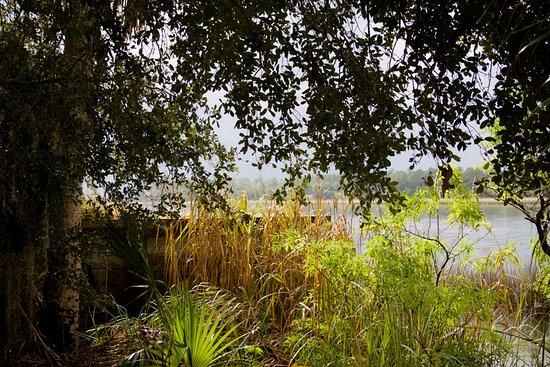 Saint Marks, FL: trail
