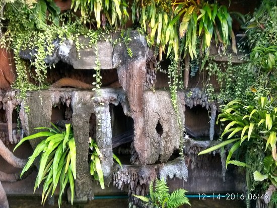 Bura Resort: IMG_20161214_064926_HDR_large.jpg