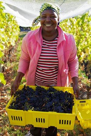 Campania, Australia: Harvest