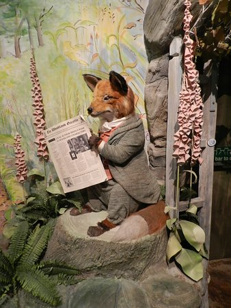Bowness-on-Windermere, UK: Mr Tod, the fox