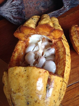 El Quetzal de Mindo Chocolate Tour: photo3.jpg
