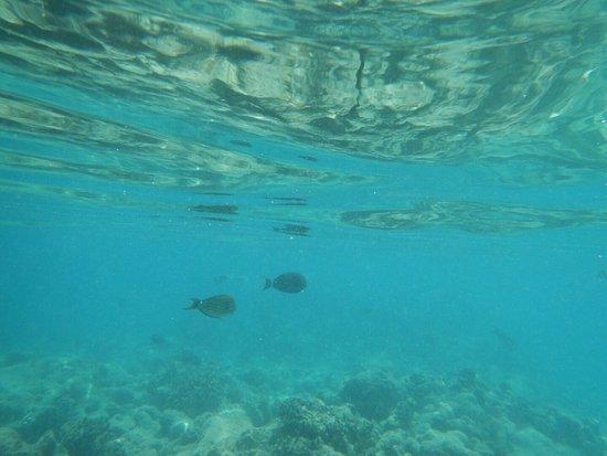 Остров Курамати: photo3.jpg