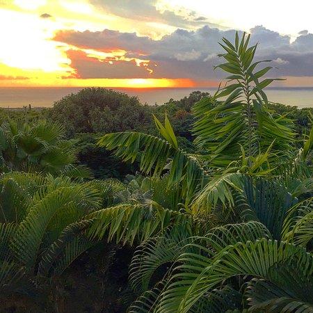 Bananas: Sunset!