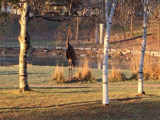 Gananoque, Kanada: Confederation Park - large flamingo sculpture