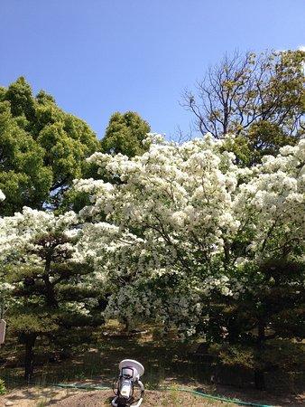 Ashiya-machi, Japón: photo0.jpg